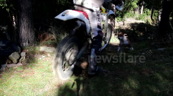 Dog races motorbike in forest