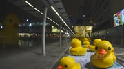 Rubber Duck with Peoples HongKong TimeLapse