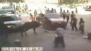 Frightened buffalo storms school in China