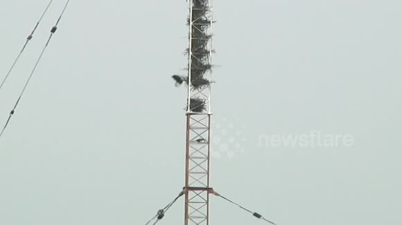 24 magpie nests discovered in signal mast