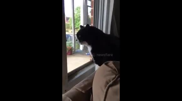 Cat Sees New Family Dog for the First Time: Freaks OUT