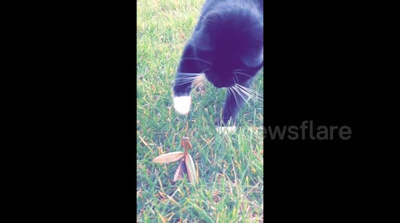 Cat vs Praying Mantis