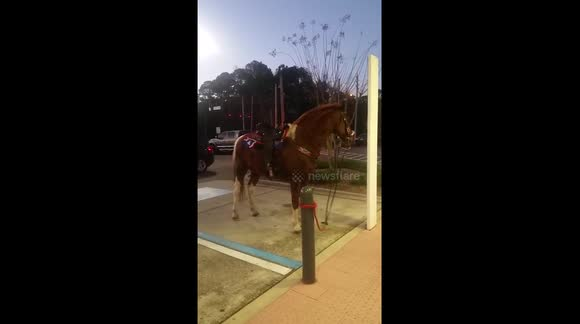 Horse 'parks' in car parking bay in Florida