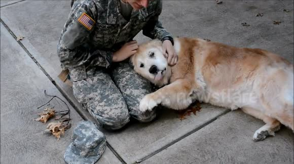 Dog reacts to soldier owner coming home for first time in three-and-a-half months