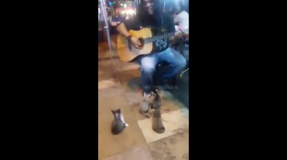 Busker performs for gang of kittens