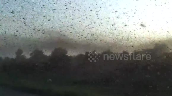 Locust swarm blots out the Sun
