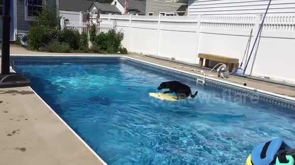 A Day in the life of a Dog and a Pool