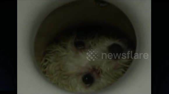Firefighters save dog trapped in toilet in China