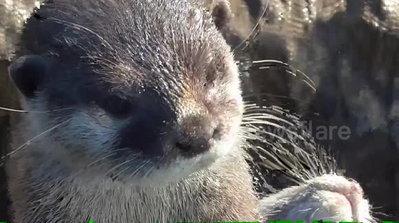 Who knew otters could make such a noise?