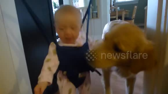 Dog won't stop 'kissing' baby girl