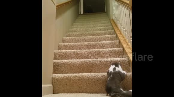Cat struggles to climb stairs
