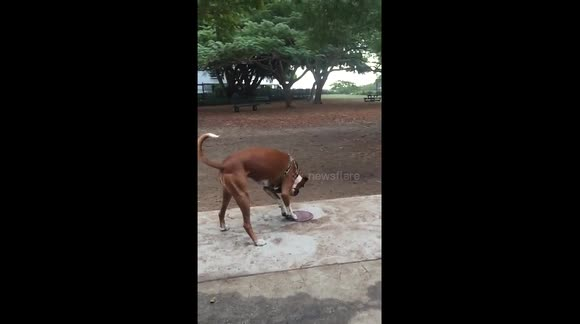 Funny dog playing with his toy