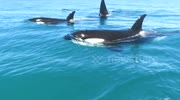 Orca experience