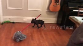Newsflare - Adorable puppy fails to impress cat