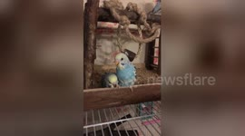 Newsflare - 'People think I have a baby in here': Bird cries
