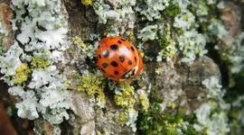 Newsflare - Ladybug Infestation in Canada