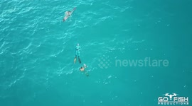 Newsflare - Drone films bull shark attack on spearfishing