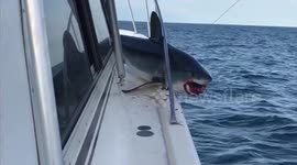 Newsflare - Huge shark jumps on fishing boat and gets stuck