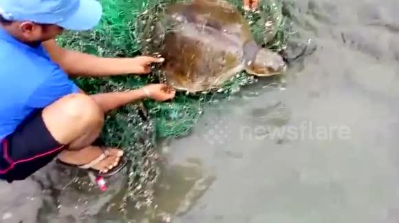 Newsflare - Locals rescue sea turtle caught in net