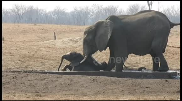 c5d69b790af Newsflare - Female elephant rescues a baby stuck in irrigation channel