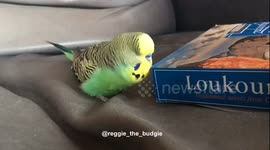 Newsflare - Parrot keeps trying to kiss and hug pretty bird