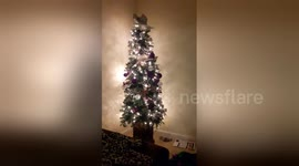 cheeky kitten throws decorations from top of christmas tree - Videos Of Decorated Christmas Trees