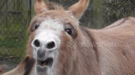 Newsflare - Singing donkey from India becomes internet sensation