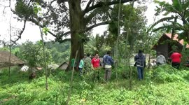 Newsflare - Strong durian bearers carry up to 120 kg of