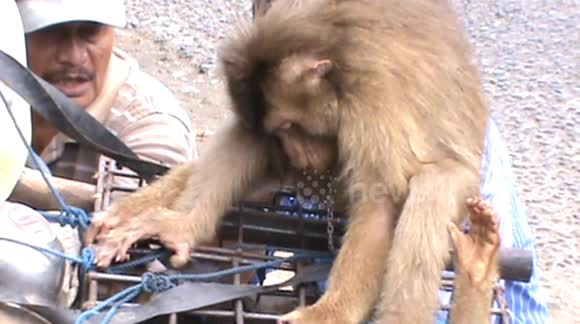 Newsflare - disturbing plants, monkeys in cages for sale as