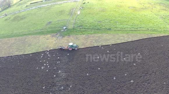 Seagulls find an easy meal behind tractor ploughing a field- phantom / gopro 3+
