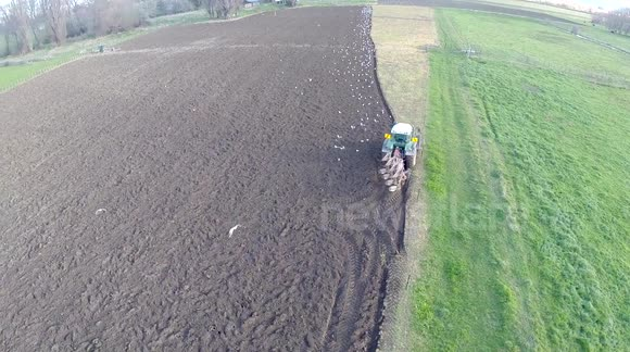 Seagulls find an easy meal behind tractor ploughing a field