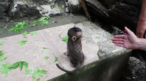 Newsflare - Stroking a wild baby monkey in Cambodia