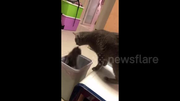 Newsflare - Mother cat accidentally drops kitten into bin