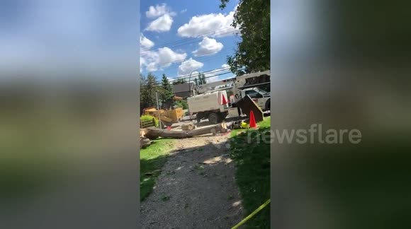 Newsflare - Man struck and injured by tree just as it was