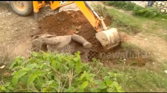 Newsflare - Indian forest officials rescue baby elephant stuck on