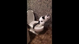 Newsflare - Little boy wants privacy during potty training