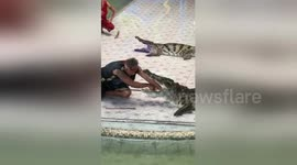 Newsflare - Crocodile bites trainer's arm in front of