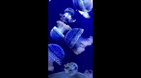 Newsflare - White spotted jellyfish
