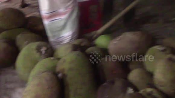 Newsflare - Jack fruit / Bangladesh / Kattal BUYING VLOG