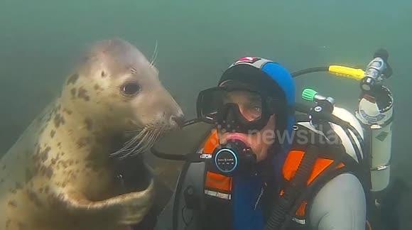 Newsflare - Adorable wild seal follows diver to give him a hug