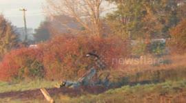 Newsflare - Northern Harrier in flight