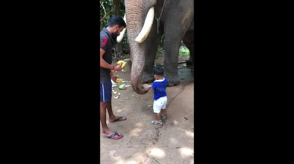 cd5d882c147 Newsflare - Celebrity elephant is gentle giant as he lets toddler feed him  bananas