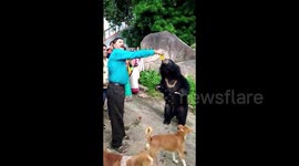 Newsflare - Sleuth of friendly bears become regular visitors