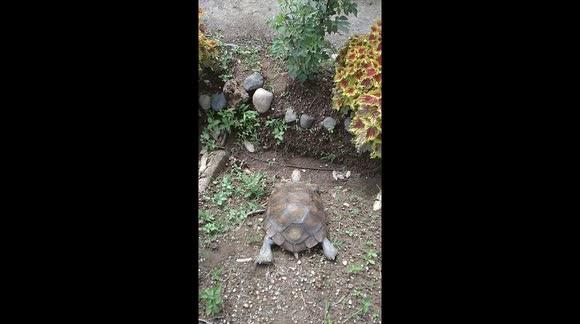 Newsflare - Headbanger! Unlucky turtle slides down slope and