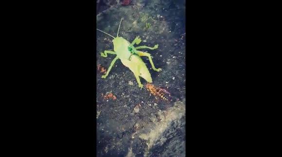 Newsflare - Grasshopper