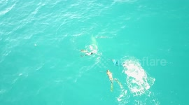 Newsflare - Drone Footage of Bull Shark attack on