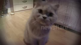 Newsflare - Relaxed to the max! Persian cat gets a blow-dry