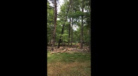 Newsflare - Man wipes out on pine tree mountain-biking in
