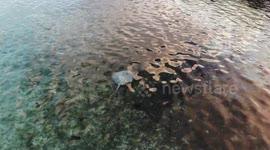 Newsflare - Bahamas Beach Trash Washed up Floatsum in