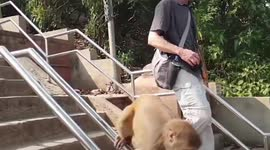 Newsflare - Clever monkey slides down railings as shortcut at Nepal